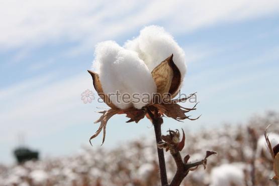 Šta znamo o tkaninama koje nosimo? Znamo li koje su zdrave, a koje su pak nezdrave za našu kožu?